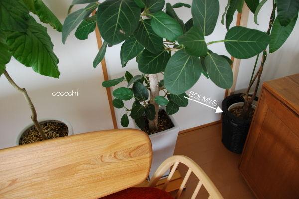 20140418_ IKEA SOLMYS 01